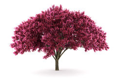 tła wiśni odosobniony drzewny biel Obrazy Royalty Free