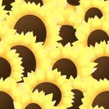 tła wiele bezszwowi słoneczniki Ilustracja Wektor