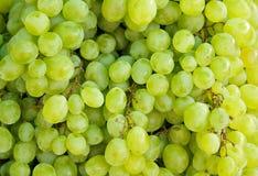 tła winogron zieleń Fotografia Stock