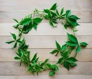 tła winogron zieleni liść Fotografia Royalty Free