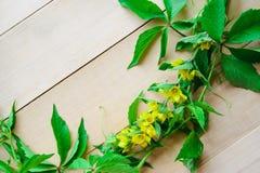 tła winogron zieleni liść Obraz Royalty Free