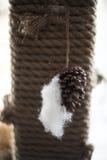 tła zakończenia rożka odosobniona sosna w górę biel Fotografia Royalty Free