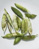 tła zamknięci zielonego grochu grochów strąki podnoszą biel Zdjęcie Royalty Free