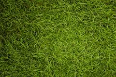 tła zamknięta trawy zieleni makro- tekstura makro- obraz royalty free