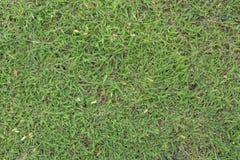 tła zamknięta trawy zieleni makro- tekstura makro- obrazy stock