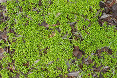 tła zamknięty dof trawy zieleni natury płycizny lato temat zamknięty Zdjęcia Stock