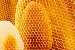 tła zamknięty honeycomb wizerunek zamknięty Zdjęcie Royalty Free