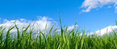 tła zamknięty ziele niebo zamknięty Zdjęcie Royalty Free