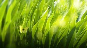 tła zieleni liść Obraz Royalty Free