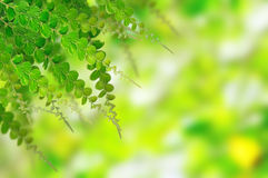 tła zieleni liść Fotografia Royalty Free