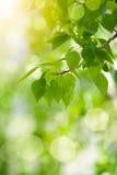 tła zieleni liść Obrazy Stock