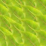 tła zieleni liść Zdjęcie Royalty Free