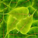 tła zieleni liść Fotografia Stock