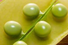 tła zieleni odosobniony grochowy biel zdjęcie stock