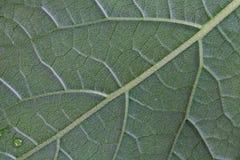 tła zielona liść tekstura Obrazy Stock
