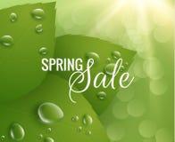 tła zielona liść wiosna eps10 kwiatów pomarańcze wzoru stebnowania rac ric zaszywanie paskował podstrzyżenia wektoru tapety kolor Fotografia Stock