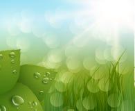 tła zielona liść wiosna eps10 kwiatów pomarańcze wzoru stebnowania rac ric zaszywanie paskował podstrzyżenia wektoru tapety kolor Zdjęcia Royalty Free
