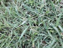 Tła zielona trawa, zielonej trawy wzory i tekstura, raindrop zdjęcie stock