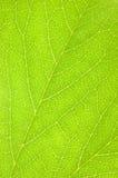 tła zielonego liść makro- tekstura Obrazy Stock
