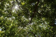 tła zielonego liść naturalna tekstura Zdjęcia Stock