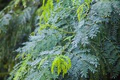 tła zielonego liść naturalna tekstura Obrazy Royalty Free