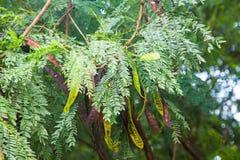 tła zielonego liść naturalna tekstura Zdjęcia Royalty Free