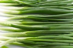tła zielonej cebuli krótkopędu pracowniany biel E Obrazy Stock
