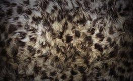 tła zwierzęcy futerko Zdjęcie Royalty Free