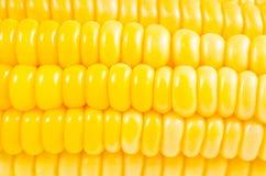 Tło Żółta świeża kukurudza zdjęcia stock