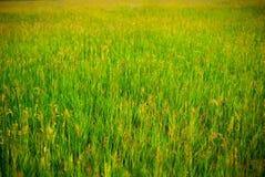 tło łąka Fotografia Stock