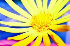 tło łatwy redaguje kwiatu wektor Fotografia Royalty Free