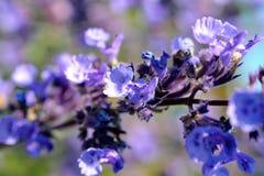 tło łatwy redaguje kwiatu wektor Obrazy Royalty Free