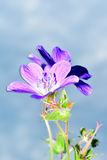 tło łatwy redaguje kwiatu wektor Zdjęcia Stock