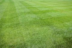 tło świeża trawy zieleń Fotografia Royalty Free