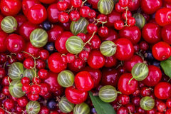 Tło świeże jagody wiśnie, rodzynki, agresty (, czerwoni i czarni,) Fotografia Royalty Free