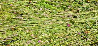Tło świeżo ciie trawy obraz stock
