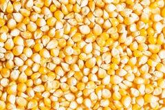 Tło świezi złoci surowi kukurydzani nasiona obraz royalty free