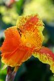 Tło żółty kwiat i słońca światło 76 Fotografia Stock
