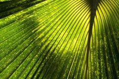 tło abstrakcjonistyczna dżungla Zdjęcie Royalty Free