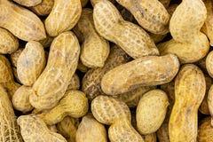 Tło arachidu światła beżu bazy bez leczenia długich wiele fasoli earthy kulinarna baza zdjęcia stock
