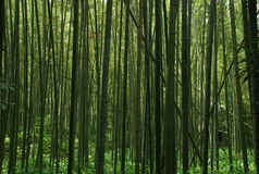 tło bambusy leśne Zdjęcia Royalty Free
