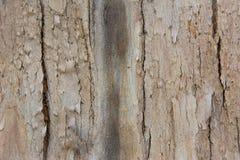 Tło, barkentyna, szarość, zieleń, odcień, ampuła, natura, część, szorstki teren, tekstura, gęsta, drewno Obraz Royalty Free