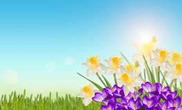 tło barwiący Easter jajek eps8 formata czerwony tulipanu wektor Zdjęcia Royalty Free