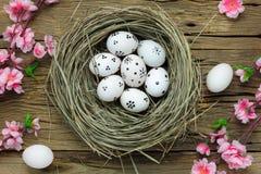 tło barwiący Easter jajek eps8 formata czerwony tulipanu wektor Szczęśliwi Easter jajka bolący na gniazdeczku także Zdjęcie Stock