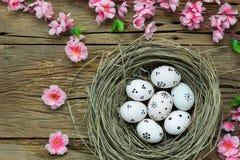 tło barwiący Easter jajek eps8 formata czerwony tulipanu wektor Szczęśliwi Easter jajka bolący na gniazdeczku także Zdjęcia Royalty Free