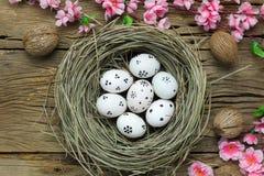 tło barwiący Easter jajek eps8 formata czerwony tulipanu wektor Szczęśliwi Easter jajka bolący na gniazdeczku także Obraz Stock