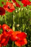 tło barwi świeżego zielonego pralnianego wiosna biel kolor żółty Zdjęcia Royalty Free