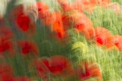 tło barwi świeżego zielonego pralnianego wiosna biel kolor żółty Fotografia Royalty Free