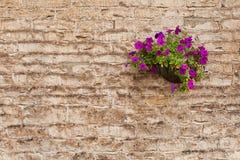 tło barwi kamienną grunge ścianę Obrazy Stock