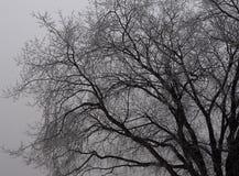 Tło Bezlistny drzewo W Czarny I Biały Obrazy Stock